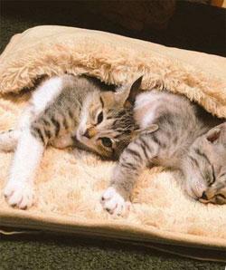 грелки для ног любят даже кошки